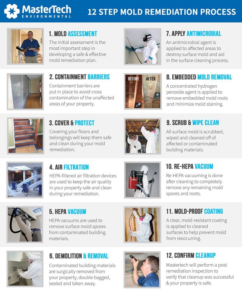 professional-basement-mold-removal-process-va