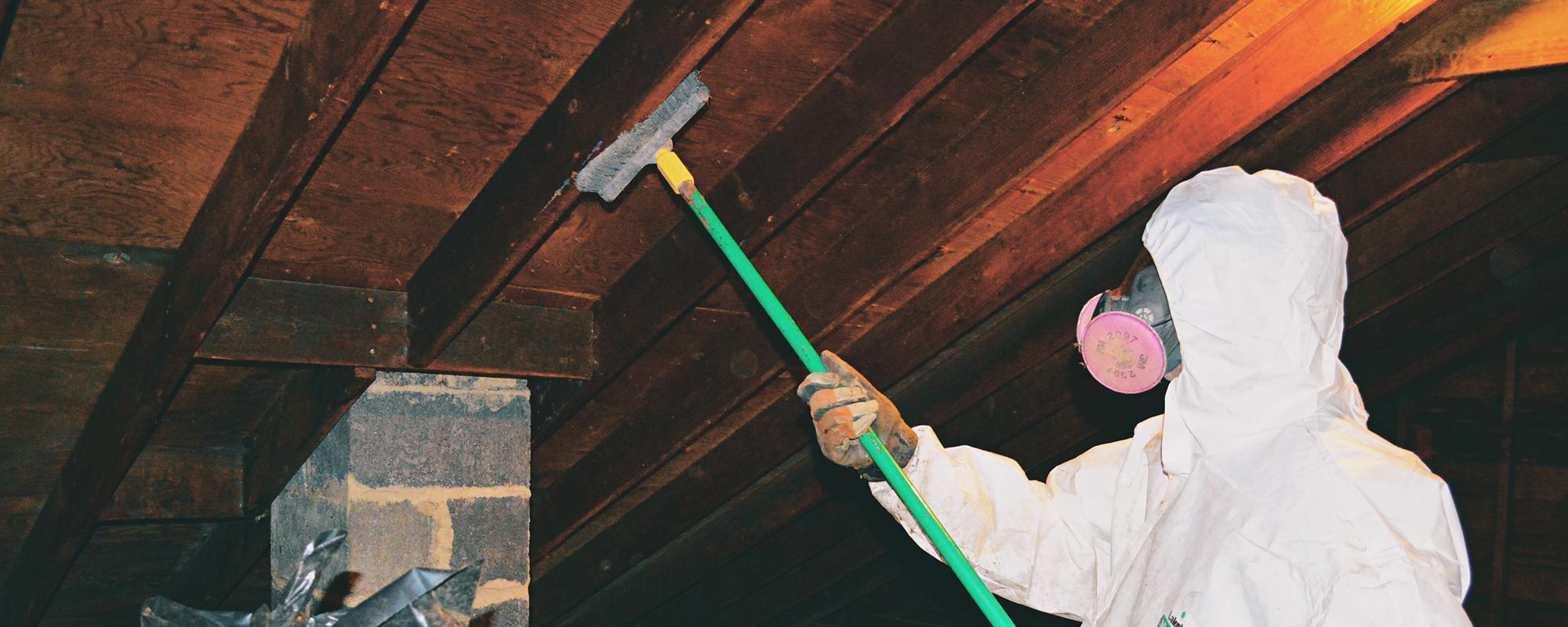 prevent-attic-mold-virginia